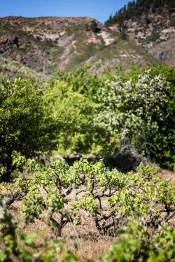 Socorro Fuentes Santiago del Teide