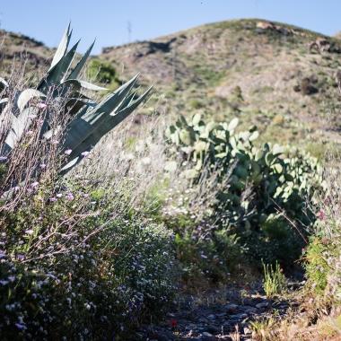 Socorro Fuentes. Entorno viñedos en Santiago del Teide
